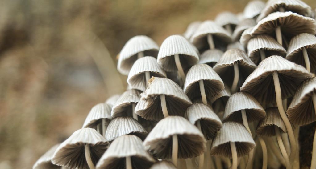 Hongos Fungicel Polybion sustituto unicel