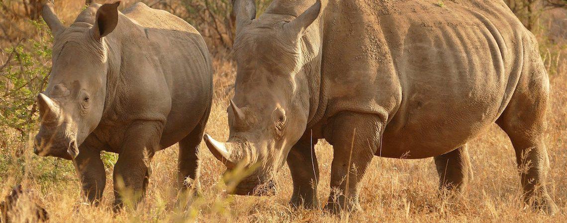 Pena de muerte a cazadores furtivos en Kenia
