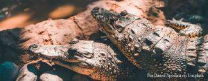 cocodrilos slider