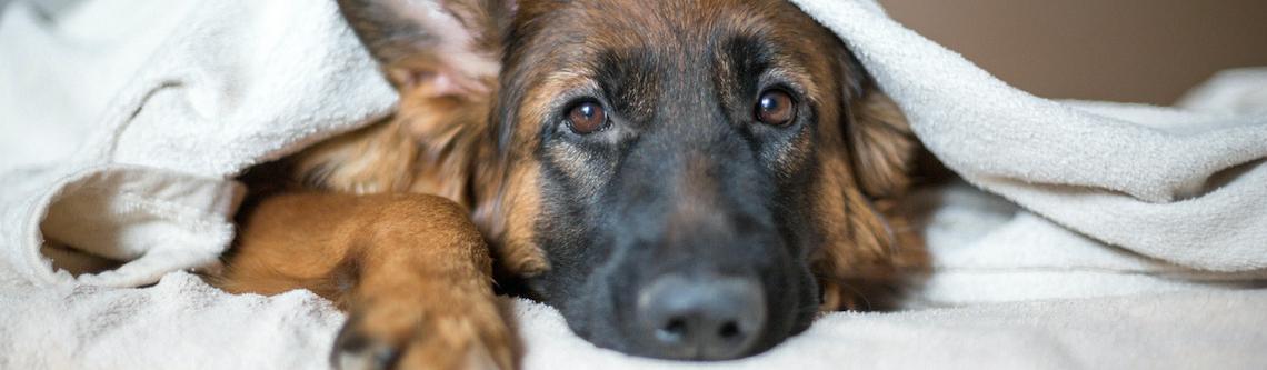 Consejos para cuidar a una mascota viejita