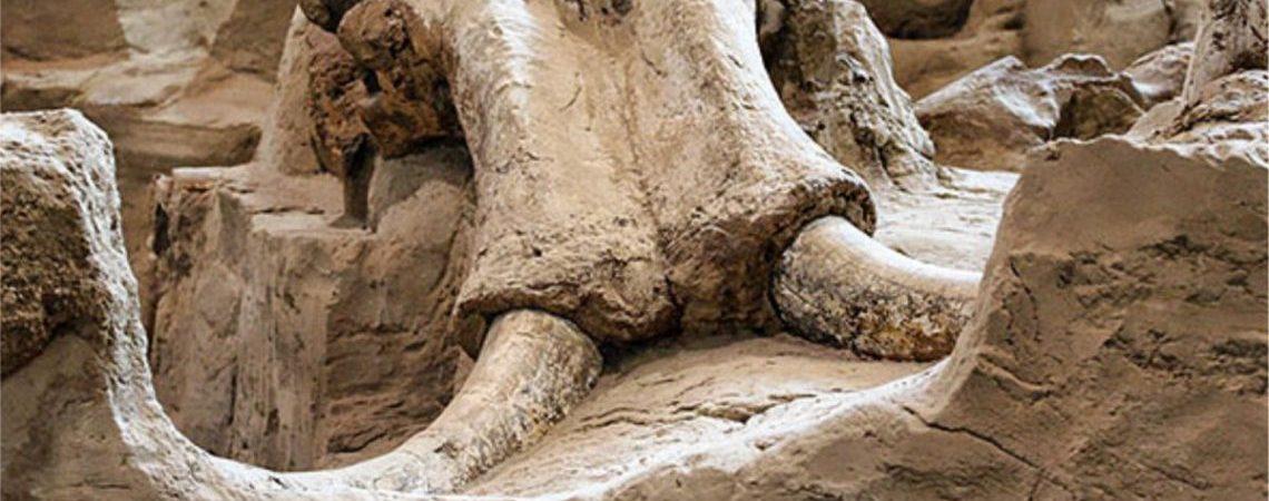 mamut slider