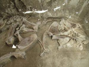 restos de mamuts encontrados en tultepec 1