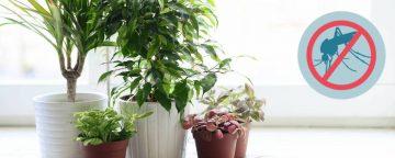 remedios-mosquitos-plantas