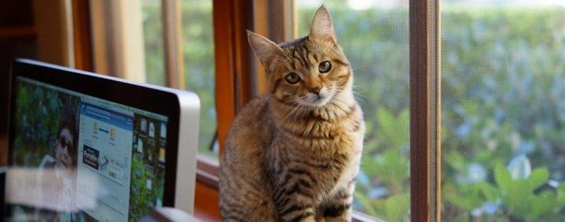 beneficios -gato