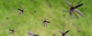 Florida-mosquitos-helicopteros-drones