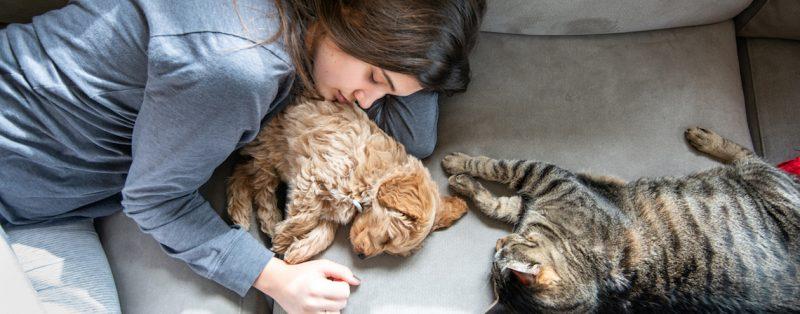 mascota-salud-mentak