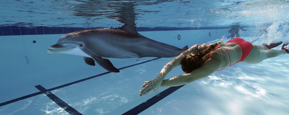 delfín-robot