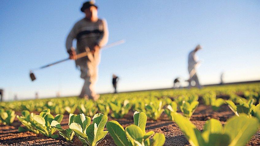 sedarh-PRODUCCIÓN-AGROPECUARIA