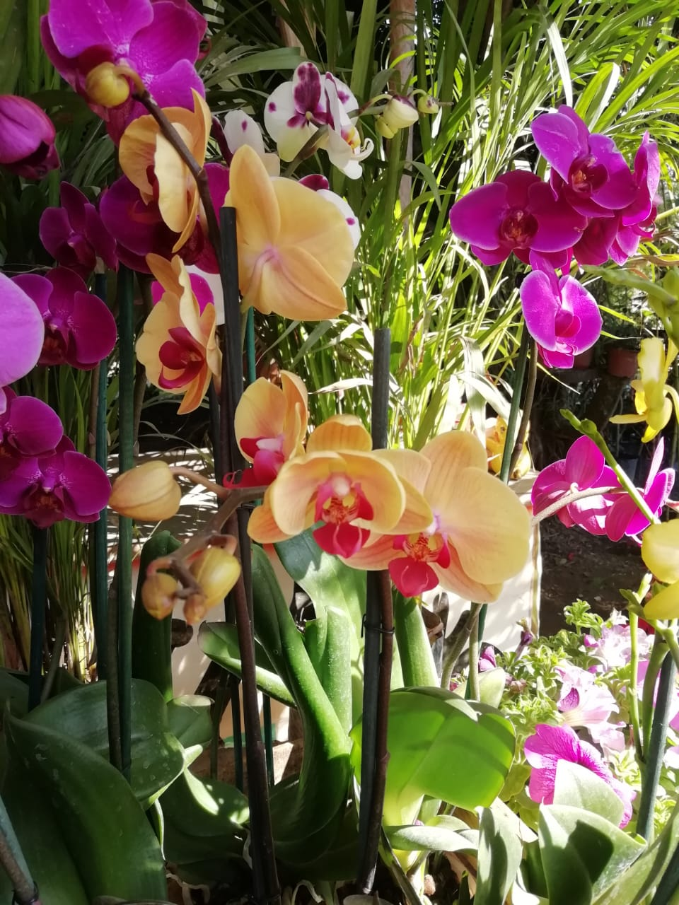 orquídeas en la huasteca potosina