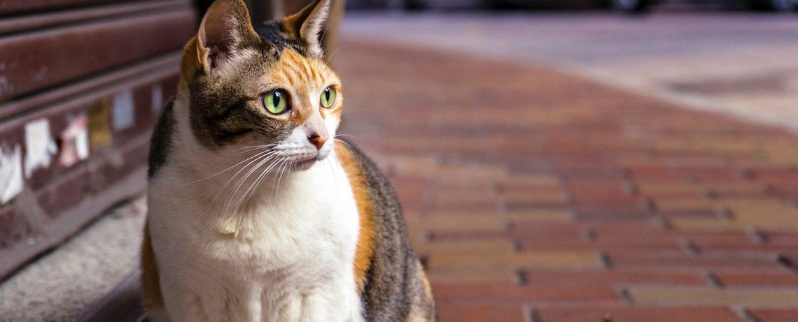 salud-gatito-adoptar-gato