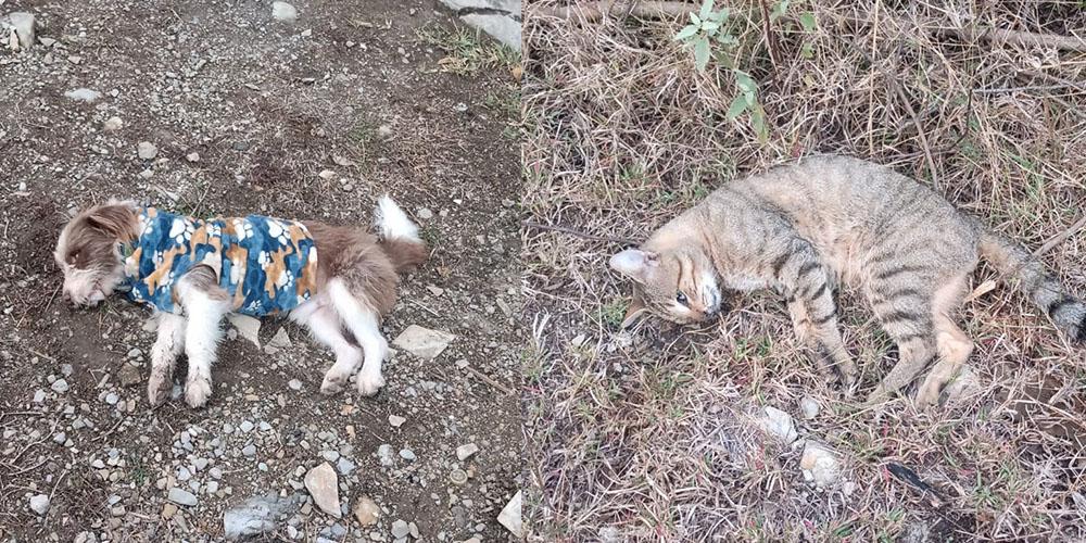 crueldad-animal-mascotas-valles