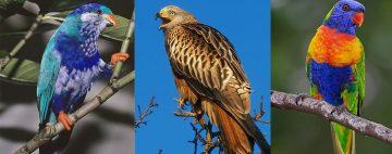 aves-exóticas-peligro-extinción