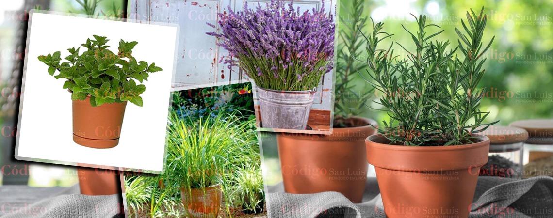 Conoce las plantas que alejan las asquerosas cucarachas de tu casa