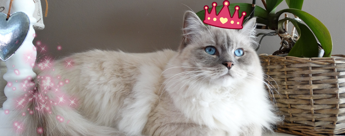 Actividades para mimar a tu gato y tratarlo como de la realeza