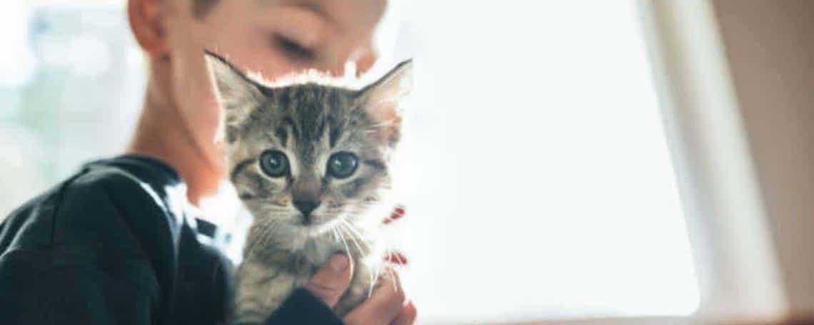 gato-niño-discapacidad