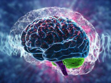 cerebro-datos
